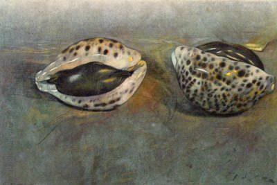 Muschellandschaft Bonell